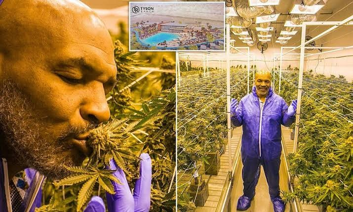 Mike Tyson Earns $500,000 Per Month From Marijuana Business